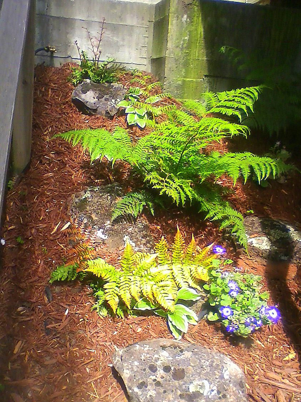 Fern with Boulders